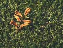 Soccer green. End of football season. Dry leaves   fallen on ground of plastic football turf. Soccer green. End of football season. Dry leaves and seeds  fallen Stock Photography