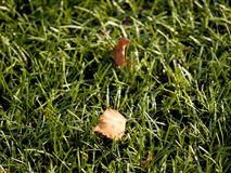 Soccer green. End of football season. Dry leaves   fallen on ground of plastic football turf. Soccer green. End of football season. Dry leaves and seeds  fallen Royalty Free Stock Photography