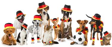 Soccer pets isolated on white background royalty free stock photography