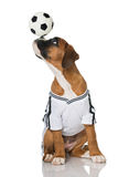 Soccer puppy Stock Photography