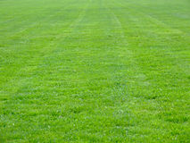 Soccer terrain. Grass on the soccer terrain in early spring royalty free stock photography