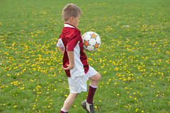Soccer Training. On the field of green Royalty Free Stock Photos