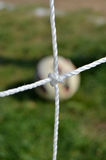 Soccer web knot Stock Image