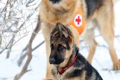 Soccorritore dal servizio di salvataggio della montagna alla croce rossa bulgara immagini stock libere da diritti