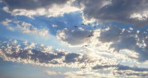 Sochi cloud summer city buildings sea black russia urban panoram. Seagulls Stock Image
