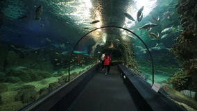 Sochi Discovery World Aquarium stock footage