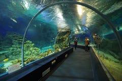 Sochi Discovery World Aquarium. SOCHI, ADLER, RUSSIA - MAR 12, 2014: Sochi Discovery World Aquarium - one of the main attractions of Adler, the largest aquarium Royalty Free Stock Image