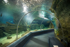 Sochi Discovery World Aquarium. Russia Stock Photos