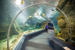 Sochi Discovery World Aquarium. Russia Stock Photography
