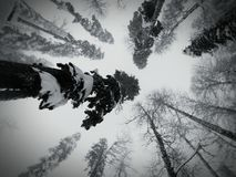 Sochi. Fish eye. Trees. Snowboarding. Skiing. Snow. Forest. Relax. Go pro hero 3 silver royalty free stock photography