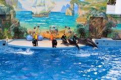 SOCHI, ROSJA: 28 09 2014 - pokazuje w dolphinarium, z dolph Obrazy Royalty Free