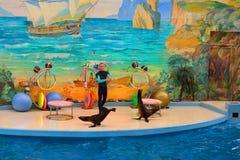 SOCHI, ROSJA: 28 09 2014 - szczegół przedstawienie w aquapark, Socha Zdjęcie Stock