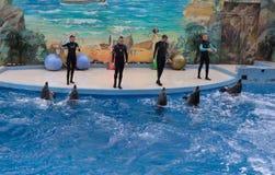 SOCHI, ROSJA: 28 09 2014 - trenera powitanie delfiny Obraz Stock