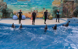 SOCHI, RUSSIA: 28.09.2014 - trainers greeting the dolphins Stock Image