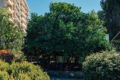 SOCHI, RUSSLAND, AM 24. SEPTEMBER 2016: Baum der Freundschaft Stockfotos