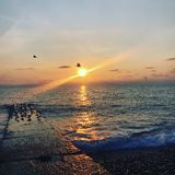 Sochi solnedgång i den Adler fiskmåsen i solen fotografering för bildbyråer