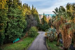 Sochi through the tall evergreen trees Stock Image
