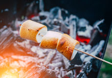 Société des amis par le feu de camp faisant les guimauves frites Photos stock