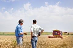 Soci commerciali sul giacimento di grano fotografia stock libera da diritti