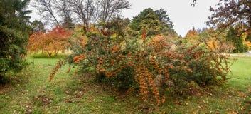 SOCI, RUSSIA - 12 NOVEMBRE 2017: Arboreto - l'autunno tardo Fotografie Stock Libere da Diritti