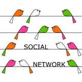 Social network. Colorful birds representing a vivid social network Stock Photography