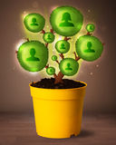 Social network tree coming out of flowerpot. Shining social network tree coming out of flowerpot royalty free stock image