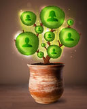 Social network tree coming out of flowerpot Stock Images