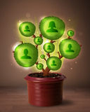 Social network tree coming out of flowerpot Royalty Free Stock Images
