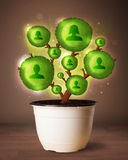 Social network tree coming out of flowerpot. Shining social network tree coming out of flowerpot royalty free stock photo
