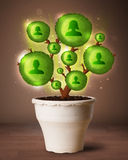 Social network tree coming out of flowerpot Royalty Free Stock Photo