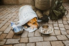 Social theme. A beggar beggar begging with a dog wrapped in a blanket to ask for help in the city of Prague is winter cold. Empty. Post and bottle with place Royalty Free Stock Photo