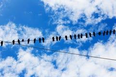 Sociala fåglar Fotografering för Bildbyråer
