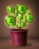 Sociale netwerkboom die uit bloempot komen Stock Fotografie