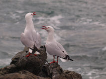 Socializing gulls. On a rock in the sea Royalty Free Stock Photo