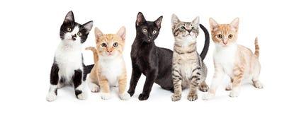 Socialt massmediabaner för gulliga kattungar Arkivfoto
