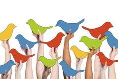 Socialt nätverkande- och fågelbegrepp arkivbild