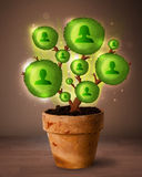 Socialt nätverksträd som kommer ut ur blomkrukan Arkivfoton