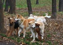 Società divertente del cane Fotografia Stock