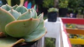 socio de la vida vegetal Fotos de archivo