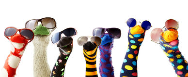 Sock puppets wearing glasses. Colorful fun sock puppets wearing glasses isolated against white background royalty free stock photo