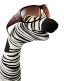 Sock striped puppet with sunglasses. Resembling zebra isolated on white background Royalty Free Stock Photos