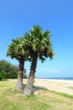Socker gömma i handflatan på stranden med backgrou för blå sky Royaltyfri Fotografi