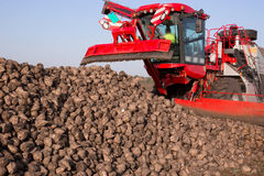 Sockerbeta och modernt jordbruks- maskineri i ett fält Royaltyfri Foto
