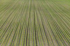 Sockerbetafält Arkivbilder