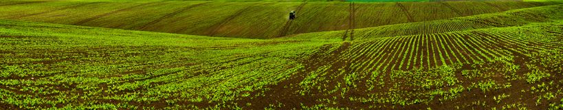 Sockerbetan kantjusterar fältlinjer, det jordbruks- kullelandskapet Royaltyfria Bilder