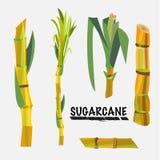 Sockerrör - Arkivfoto
