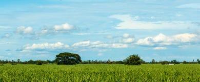 Sockerrörlantgård Royaltyfri Foto