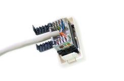 Socket de la red de ordenadores Foto de archivo libre de regalías