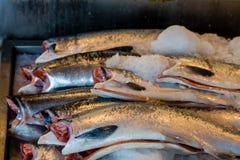Sockeye Salmon on Ice Stock Images
