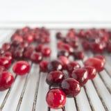 Sockrade Cranberries Royaltyfria Bilder